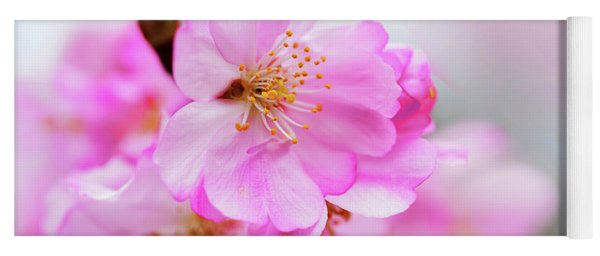 Cherry Blossoms Sweet Pink Yoga Mat