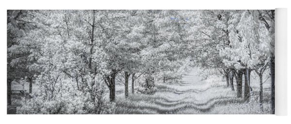 Cherry Orchard Roadway In Infrared Yoga Mat