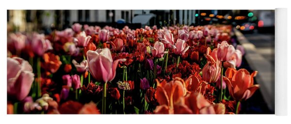 Chicago Tulips In Morning Sun  Yoga Mat