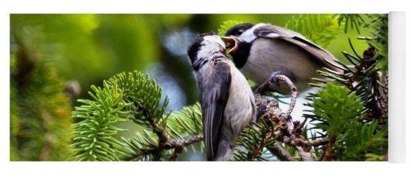 Chickadee Feeding Time Yoga Mat