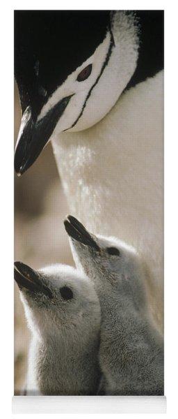 Chinstrap Penguin Pygoscelis Antarctica Yoga Mat