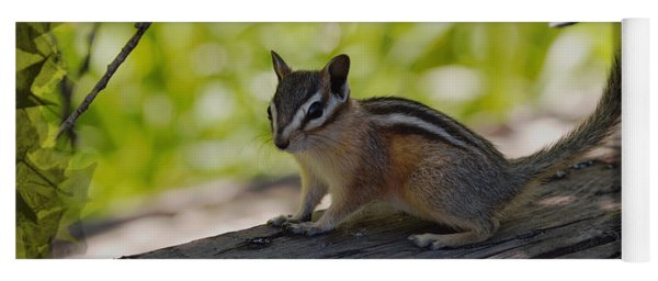 Chipmunk In The Shade Yoga Mat