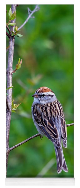 Chipping Sparrow Yoga Mat
