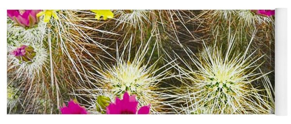 Cholla Cactus Blooms Yoga Mat
