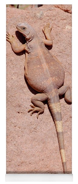 Chuckwalla, Saurolamus Ater Yoga Mat