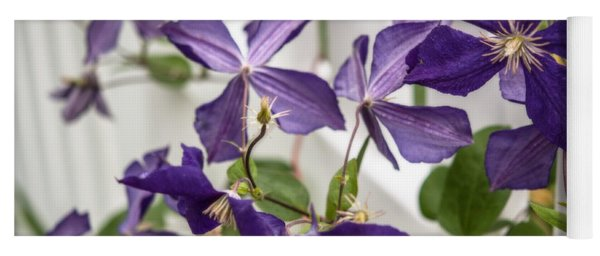 Clematis On A Fence Yoga Mat