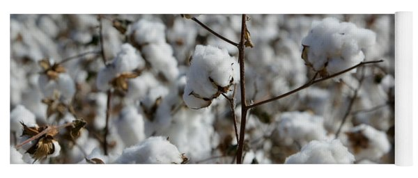 Close-up Of Cotton Plants In A Field Yoga Mat