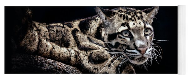 Clouded Leopard Yoga Mat