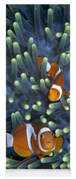 Clown Anemonefish Amphiprion Ocellaris Yoga Mat