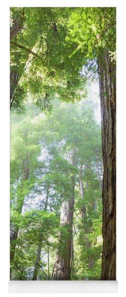Coastal Redwoods  Yoga Mat