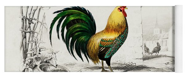 Cock Illustrated By Charles Dessalines D Orbigny Yoga Mat