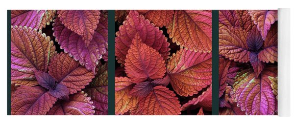 Yoga Mat featuring the photograph Coleus Collage by Jessica Jenney