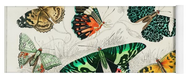 Collection Of Various Butterflies Yoga Mat
