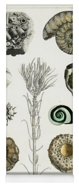 Collection Of Various Illustrated Fossils Yoga Mat