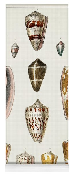 Collection Of Various Shells Yoga Mat