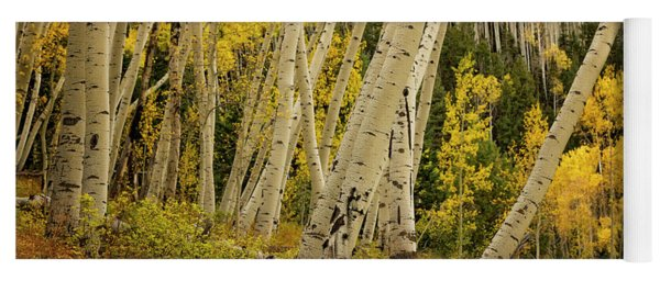 Colorado Fall Aspen Grove Yoga Mat