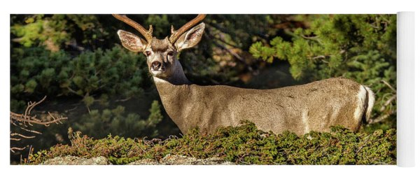 Colorado Mule Deer Buck Yoga Mat