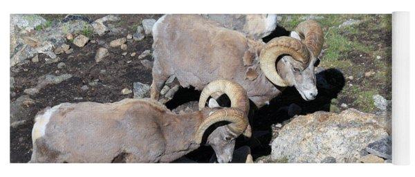 Colorado Rams Yoga Mat