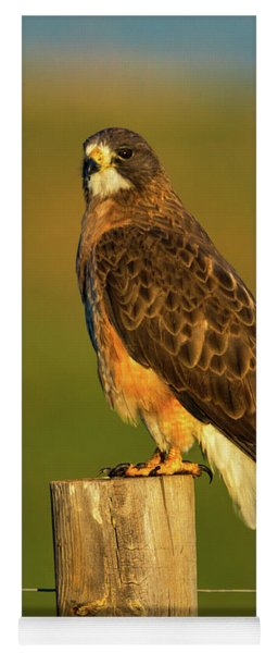 Colorado Swainson's Hawk Yoga Mat