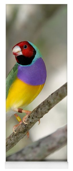 Colorful Gouldian Finch Yoga Mat