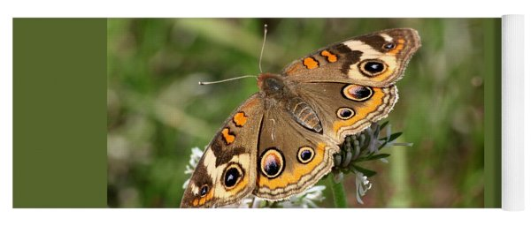 Common Buckeye Butterfly Close-up Yoga Mat