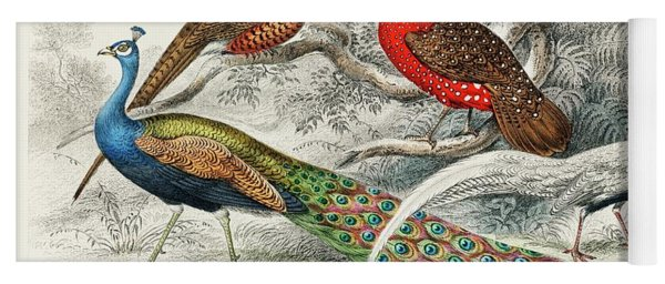 Common Peacock, Ringed Pheasant, Horned Pheasant And Silver Pheasant Yoga Mat