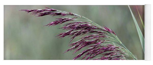 Yoga Mat featuring the photograph Common Reed Flower Stalk by Scott Lyons