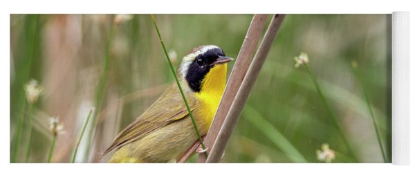Common Yellowthroat In The Marsh Yoga Mat