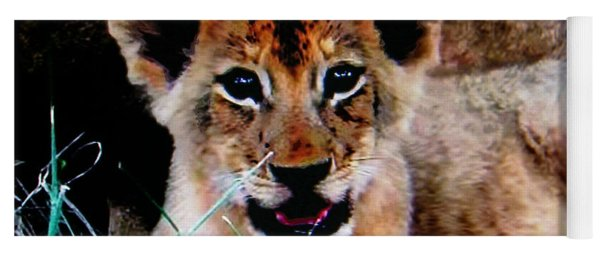Contented African Lion Cub Yoga Mat