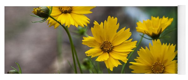Yoga Mat featuring the photograph Coreopsis In Bloom by Robert Potts