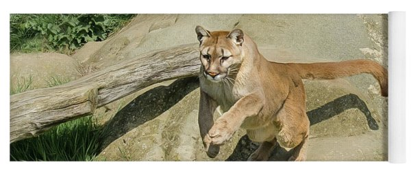 Cougar Jumping Across A Stream Yoga Mat