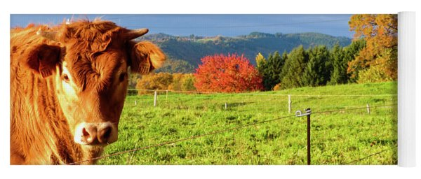 Cow And Autumn Colors  Yoga Mat