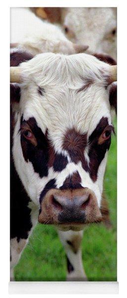 Cow Closeup Yoga Mat