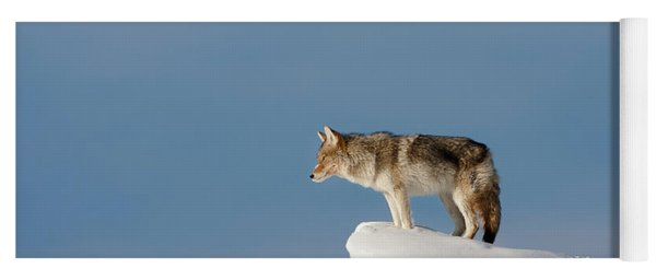 Coyote At Overlook Yoga Mat