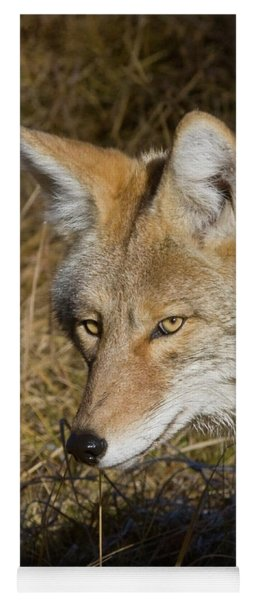 Coyote In The Wild Yoga Mat