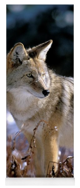 Coyote In Winter Light Yoga Mat