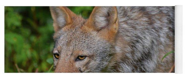 Coyote On The Hunt Yoga Mat