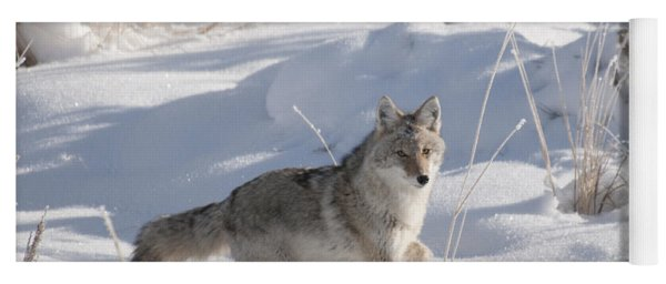 Coyote On The Move Yoga Mat