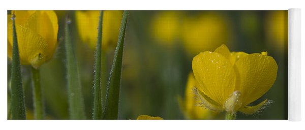 Yoga Mat featuring the photograph Creeping Buttercup by Robert Potts