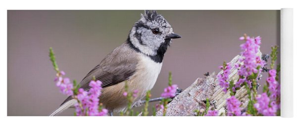 Crested Tit In Heather Yoga Mat