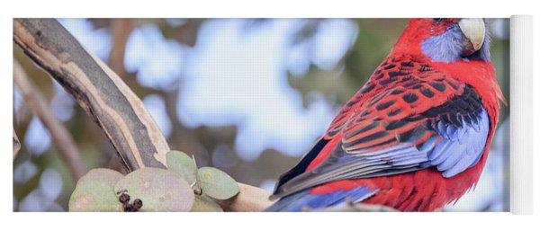 Crimson Rosella 03 Yoga Mat