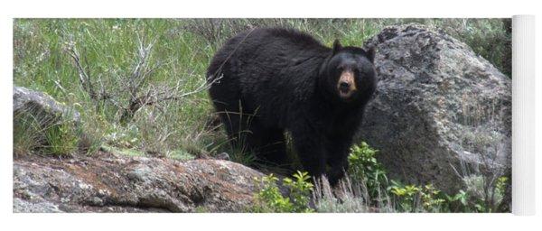 Curious Black Bear Yoga Mat