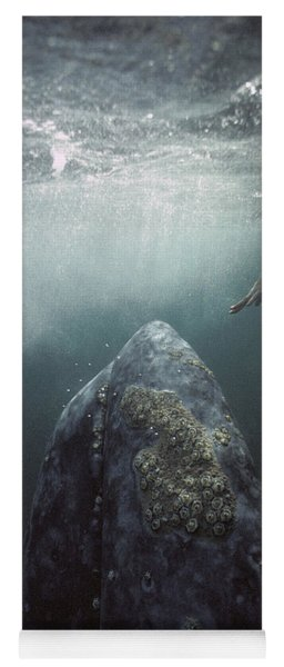 Curious Gray Whale And Tourist Yoga Mat