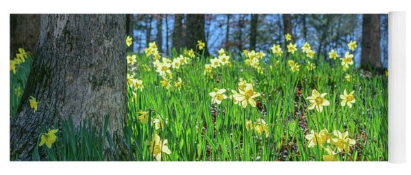 Daffodils On Hillside 2 Yoga Mat