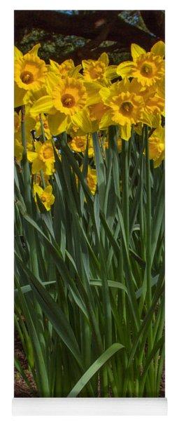 Daffodils Standing Tall Yoga Mat