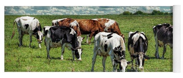 Dairy Cattle Grazing In A Pasture In West Michigan Yoga Mat
