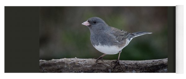 Dark Eyed Junco Yoga Mat