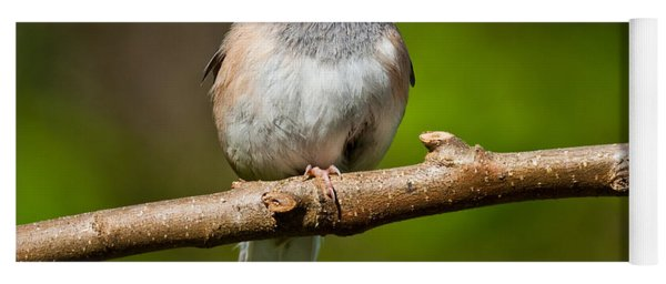 Dark Eyed Junco Perched On A Branch Yoga Mat