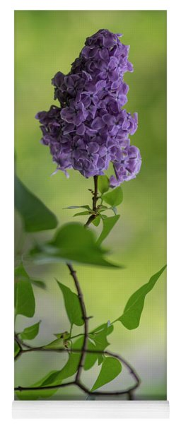 Dark Violet Lilac Yoga Mat