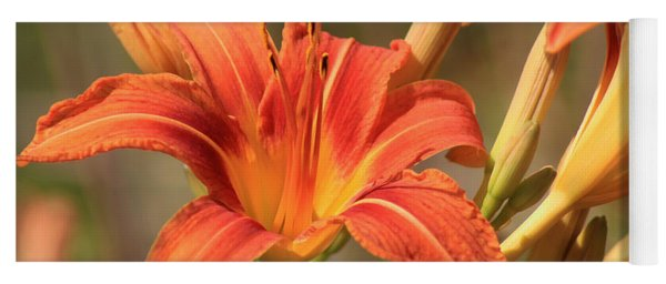 Day Lilies In The Wild 1 Yoga Mat
